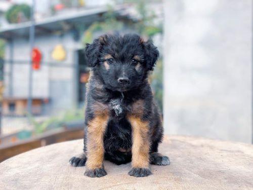 Bekijk onze puppy's
